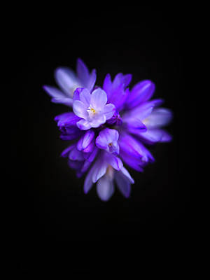 Photograph - Violet Constellation by Alexander Kunz