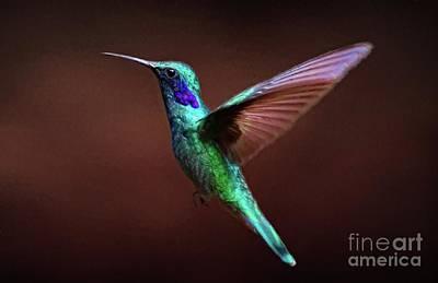 Digital Art - Violet Eared Hummingbird by Suzanne Handel