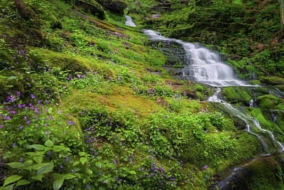 Woodland Violet Photograph - Violet Falls by Bill Wakeley