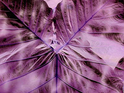 Photograph - Violet Heart by Florene Welebny