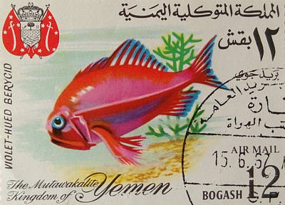 Violet-hued Berycid Fish Original