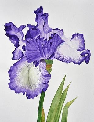 Violet Iris Flower With Leaves Original