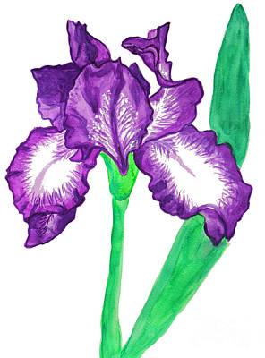 Painting - Violet Iris With White by Irina Afonskaya