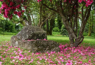 Photograph - Violet Laplante City Park by Robert Potts