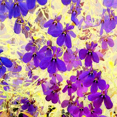Photograph - Violet Moths by Marianne Dow