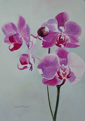 Orchid Art Painting - Violet Orchid by Sharon Freeman