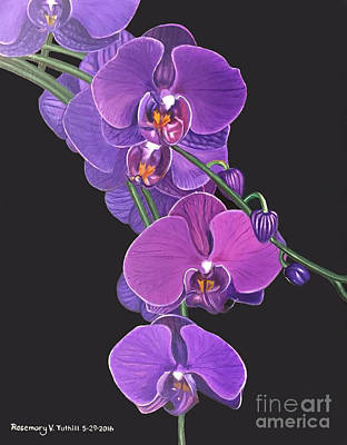 Dea Painting - Violet Orchids by Rosemary Vasquez Tuthill