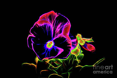 Photograph - Violet Pansy 1-6 by Ray Shrewsberry