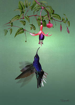 Digital Art - Violet Sabrewing Hummingbird And Fuchsia by Spadecaller