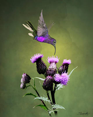 Digital Art - Violet Sabrewing Hummingbird And Thistle by Spadecaller