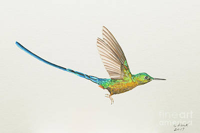 Painting - Violet-tailed Sylph by Stefanie Forck