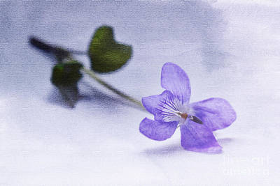 Photograph - Violet by Terri Waters