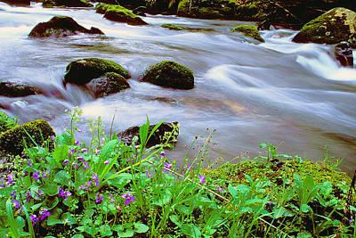 Violets Along Hazel Creek Original by Alan Lenk