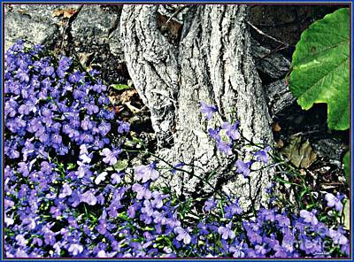 Photograph - Violets At My Feet by Sarah Loft