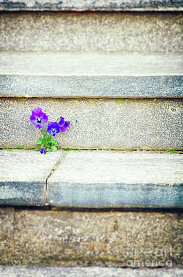 Photograph - Violets    by Silvia Ganora