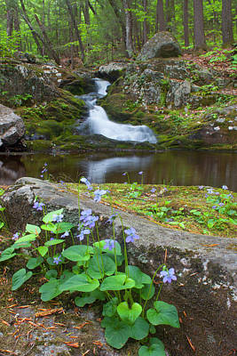 Photograph - Violets Waterfall And Pool by John Burk