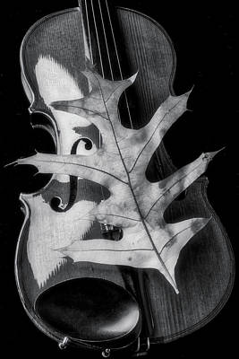 Photograph - Violin And Autumn Leaf In Black And White by Garry Gay