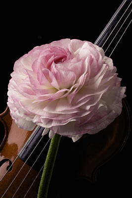 White Ranunculus Flower Photograph - Violin And Ranunculus by Garry Gay