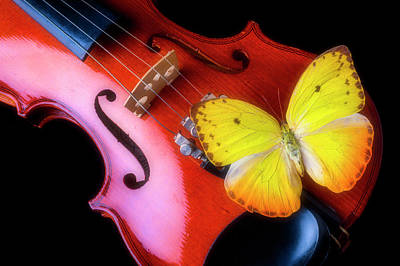 Photograph - Violin And Yellow Butterfly by Garry Gay