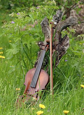 Violin Bows Violin Bows Photograph - Violin  by Dagmar Batyahav
