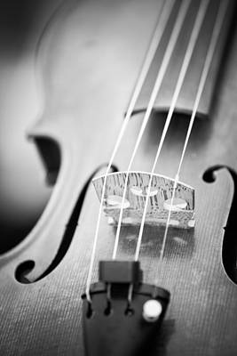 Violins Photograph - Violin  by Edward Myers