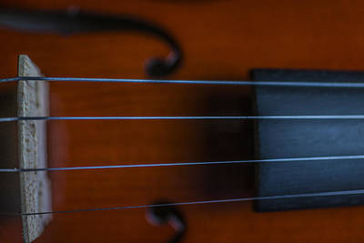 Music Royalty-Free and Rights-Managed Images - Violin Portrait Music 4 by David Haskett II
