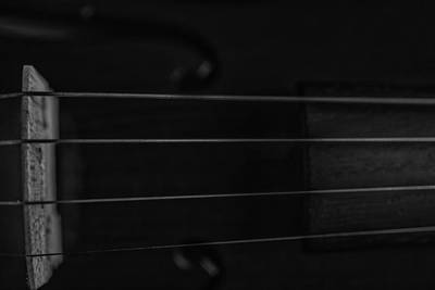 Music Royalty-Free and Rights-Managed Images - Violin Portrait Music 9 Black White by David Haskett II