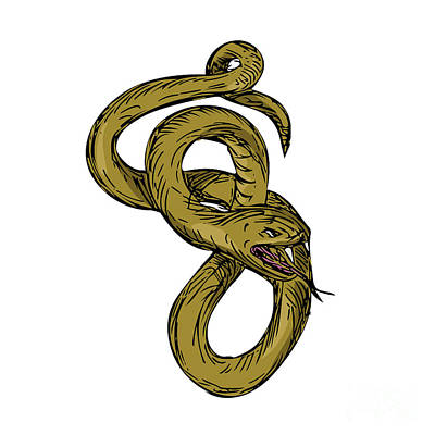 Viper Coiled Ready To Pounce Drawing Art Print