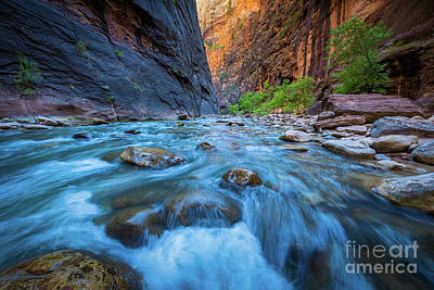 Zion National Park Photograph - Virgin River Flow by Inge Johnsson