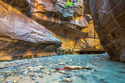 Photograph - Virgin River Narrows by Michael Balen