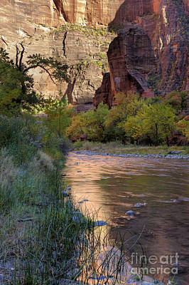 Photograph - Virgin River Reflection by Sandra Bronstein