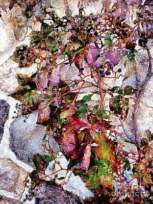 Photograph - Virginia Creeper Vine - Vine On Stone Wall by Janine Riley