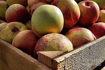 Virginia Apples  Art Print by John S