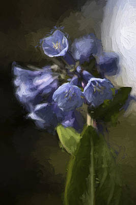 Photograph - Virginia Blue Bell Flowers by Ron Grafe