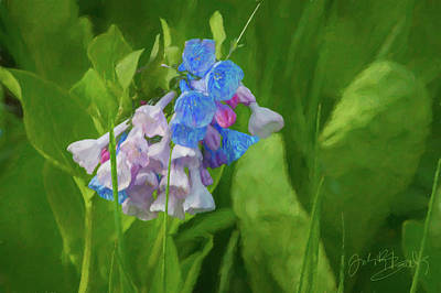 Digital Art - Virginia Bluebell At Springtime by Judith Barath