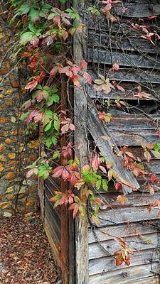 Photograph - Virginia Creeper And Chimney by Joe Duket