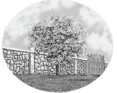Virginia-dogwood Art Print