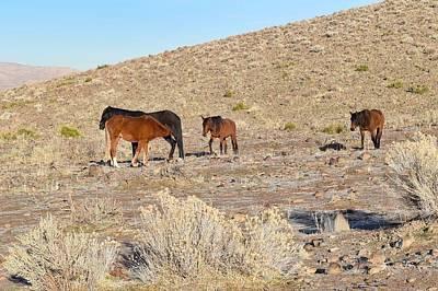 Virginia Range Mustangs Art Print