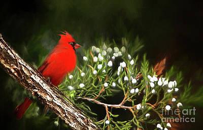 Photograph - Virginia State Bird by Darren Fisher