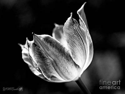 Photograph - Virichic In Black And White by J McCombie
