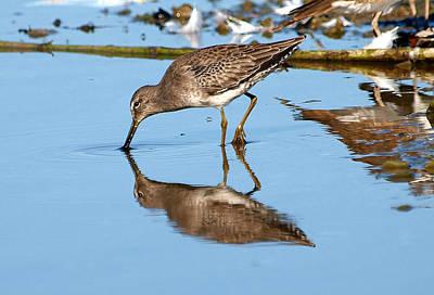 Rare Bird Sighting Photograph - Viscosity by Kala King