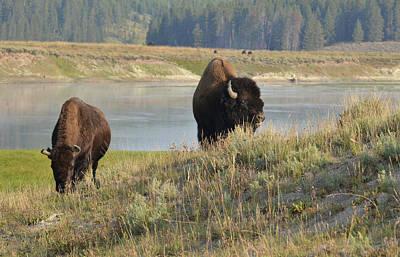 Photograph - Visions Of Yellowstone by Rae Ann  M Garrett