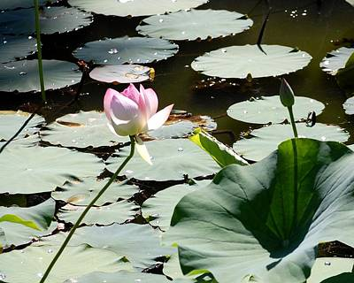 Photograph - Visit To Lilly Pond by David Lane