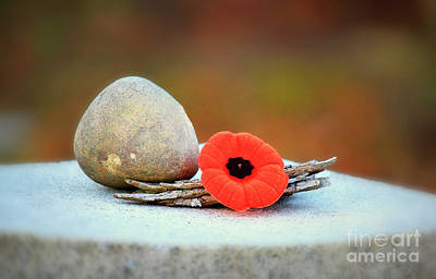 Photograph - Visit With Red Poppy Flower by Charline Xia