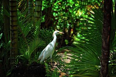 Photograph - Visitor In The Garden by Lynn Bauer