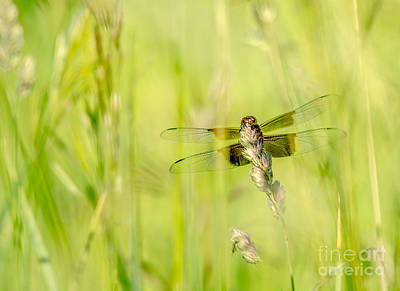 Photograph - Visitor In The Grass by Cheryl Baxter