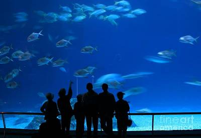 Photograph - Visitors At An Aquarium by Yali Shi