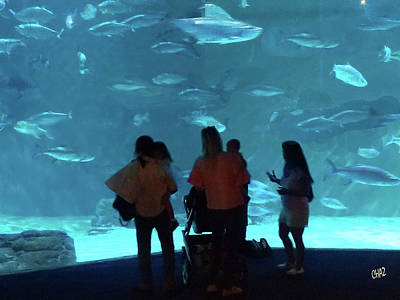 Photograph - Visitors At The Aquarium by CHAZ Daugherty