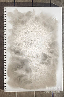 Drawing - Visual Diary Dandelion by Jorgo Photography - Wall Art Gallery