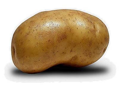 Photograph - Vivi Wants A Potato by Lanita Williams